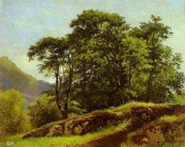 beech forest in switzerland 1863 XX the russian museum st petersburg russia